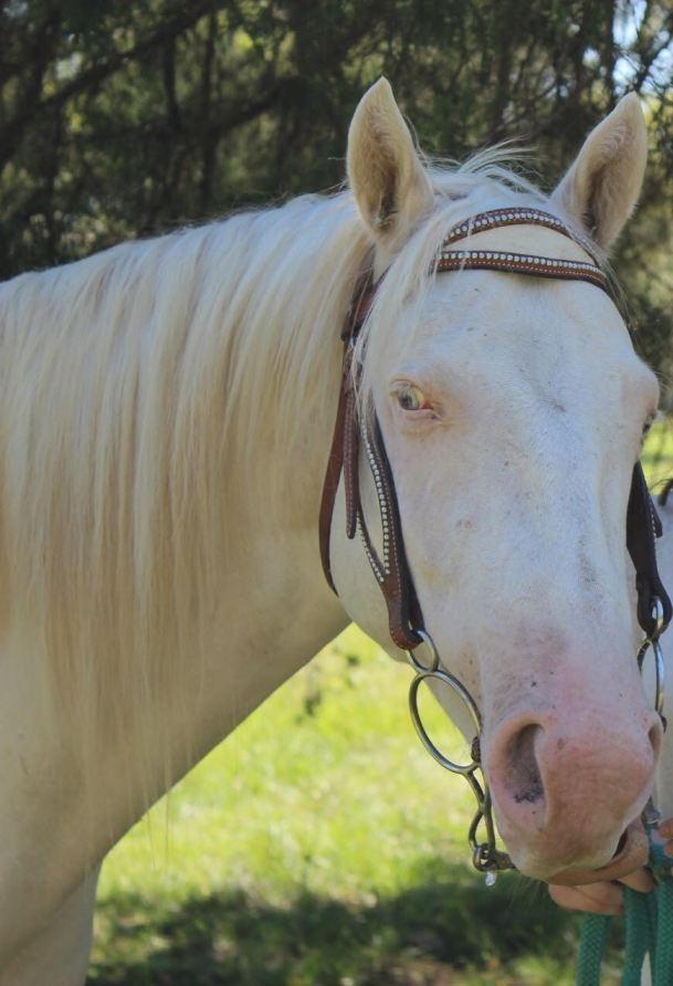 Jasper - Quarter Horse