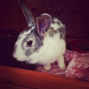 Yoshi - Rabbit