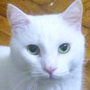 Emerald - Russian White